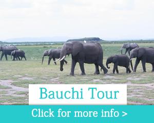 bauchi-tour